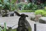 Squirrel in temple area
