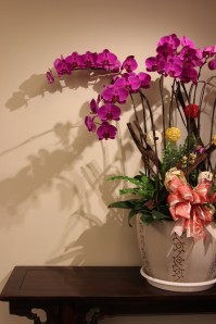 Orchid as decoration