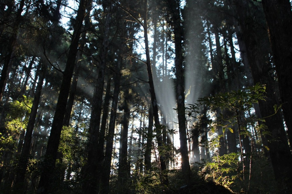 Sunbeams in Alishan 2