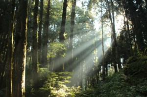 Sunbeams in Alishan