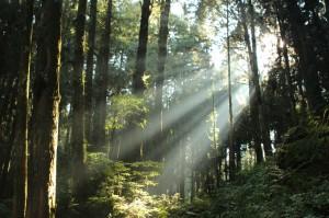 Sunbeams in Alishan