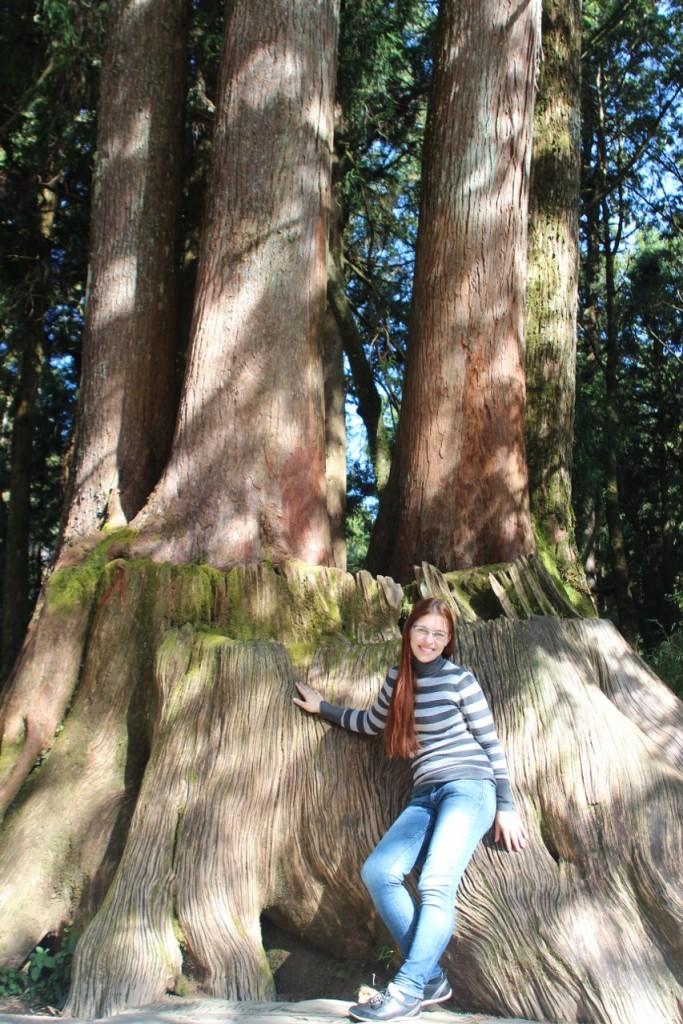 4 sister trees Alishan