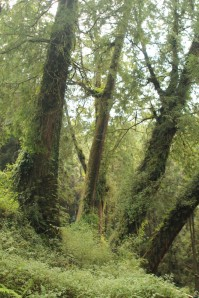 Forest in Alishan