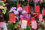 Orchids at Longshan Temple