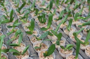 Small seedlings