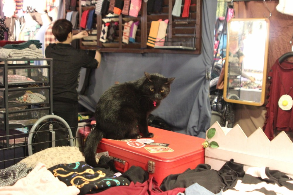 Cat at nightmarket kaohsiung