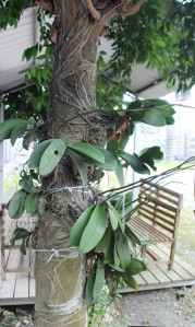 Tree with Orchids