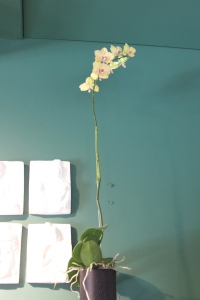 Langer Blütenstiel