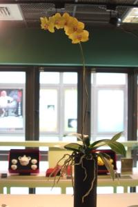 Orchidee mit langem Blütenstiel